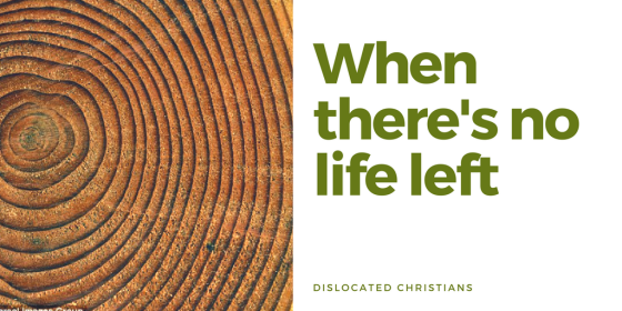When there's no life left | Tree Rings | Romans 8:28 | Romans 8 | Hope and Purpose | Dislocated Christians