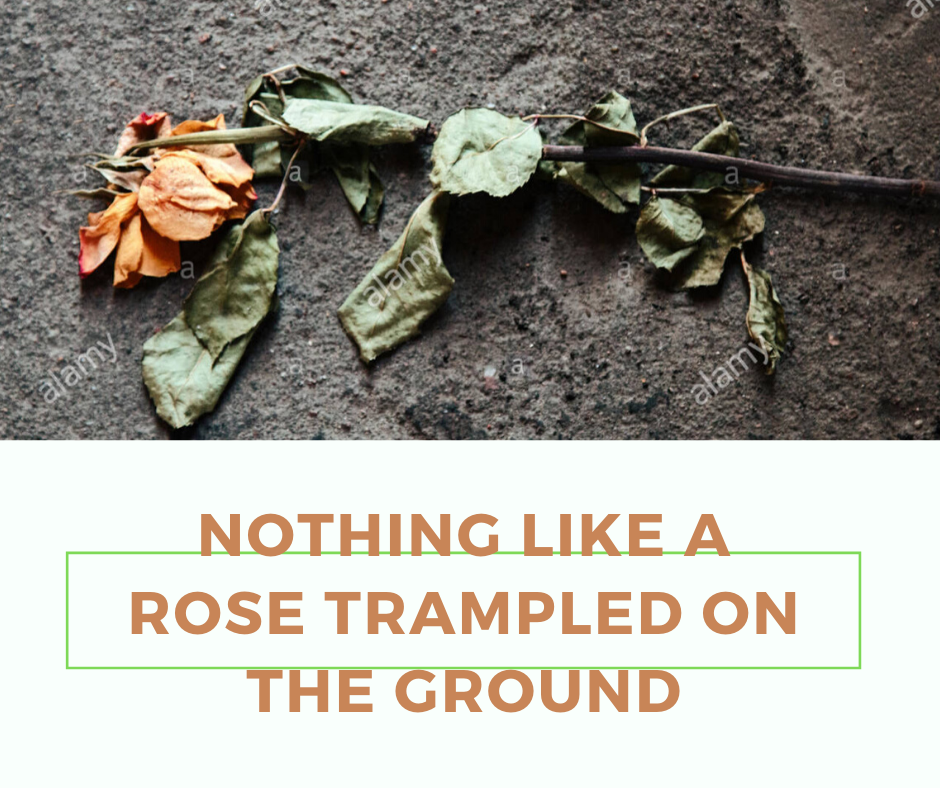 Nothing like a rose trampled on the ground Bible